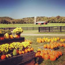 Pumpkin Patch Columbus Wi by These 9 Charming Pumpkin Patches In Kentucky Are Picture Perfect