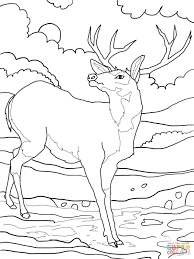 Young Moose Deer Coloring Page Printable Pages Alaska Horn