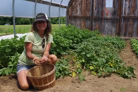 Techniques By Trish September 2014 by Potatoes 101 How To Get Great Yields With Successful Techniques
