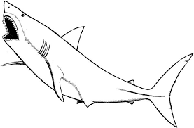 Mesmerizing Coloring Page Shark Marine Animals Pages