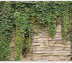 murando fototapete 400x280 cm vlies tapeten wandtapete moderne wanddeko design wand dekoration wohnzimmer schlafzimmer büro flur steine mauer efeu