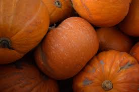 Medina Tn Pumpkin Patch by Gettyimages 857367972 Jpg