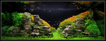Aquarium: Aquascape Designs | Aquascape Pond | Aquascape Inc Mongolian Basalt Columns Set Of 3 Landscape Fountain Kit The Pond Guy Greg Wittstock Aquascape Founder Fire Fountains Inc Company Saint Charles Il Aqua Video Facebook Youtube Designs For Your Aquarium Room Fniture Filters And Filter Systems Archives Bjl Aquascapes Colts Neck New Jersey Unlimited Cci Client For A Eclectic With Contractor