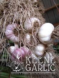 organic garlic bulbs keene organics garlic