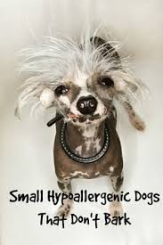 List Of Non Hypoallergenic Dogs by Small Hypoallergenic Dogs For Kids Dog Vills Small
