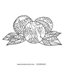 Coloring Pages For AdultsHand Drawn Sketch Style Peach Fruit Ripe Whole And
