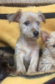 non shedding dogs dogs and puppies rehome buy and sell in the