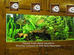 freshwater aquarium plant care substrate ferts co2 lighting