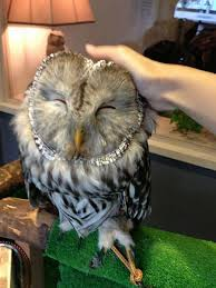 London Opens A Bar Where You Can Pet Owls 55 Best Owl Images On Pinterest Barn Owls Children And Hunting Owls How To Feed Keep An Owlet Maya A Brief Introduction The Common Types Of Six Reasons Why You Dont Want An Owl As Pet Bird Introducing Gizmo Baby Whitefaced Youtube 2270 Animals 637 Oh Meine Uhus I Love Owls My Barn Cat Baby By Disneyqueen1 Deviantart All Things Nighttime Predator Cute Animals