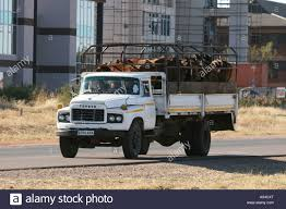 A Cattle Truck Driving In Gaborone Botswana Stock Photo: 12247295 ... Truckdomeus Intertional Mxt Truck Cxt Trick My 2018 Images Pictures Cxt How To Get In Youtube Photos Hit The Road With Cars One Love 2008 Harvester Mxt 4x4 For Sale Fl Vin Trucks For Sale 29057 Loadtve Specs Price Prettymotorscom Video Nexttruck Blog Industry News Trucker Other Garagejunkies Pickup