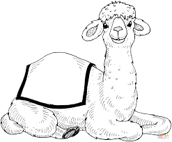Camel Coloring Pages Free Printable Large Size