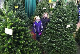 Aimee Bowersox And Her Daughter Lydia 12 Of Middleburg Look Over A Display The Various Types Christmas Trees Growers Produce In Pennsylvania At