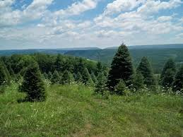 Balsam Hill Christmas Trees Complaints by Pallet Christmas Tree Part 3