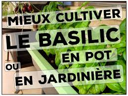 culture des aromatiques et condimentaires archives les jardins