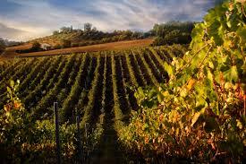 The Stunning Views Of Chianti
