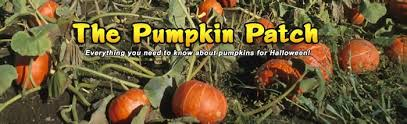 Where Did Pumpkin Patch Originate by Pumpkin Patch Everything You Ever Wanted To Know About Pumpkins