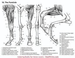 Bkcldha Cool Animal Anatomy Coloring Book