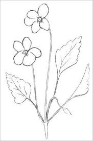 Easy Flower Drawing