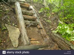 100 Wildcat Ridge Appalachian Trail A Trail Ladder Trail That