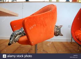 A Pet Cat In A Designer Chair In A Contemporary Self Build Home UK ... 196 Best Chairs Armchairs Images On Pinterest Sofas Home And A Designers Eclectic Bohemian California House Tour Lonny Designs For New Homes In Excellent Designer Fair Ideas Pet Cat In A Designer Chair Contemporary Self Build Home Uk Design Hall Interior Pictures Image How To Be Hidden Storage Creative Solutions By Dig This Lifts The San Francisco Fog With Cheery Hues Green Office Marceladickcom Best Old Images Newway