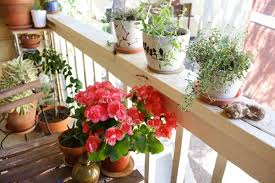 View In Gallery Flowers On A Small Balcony