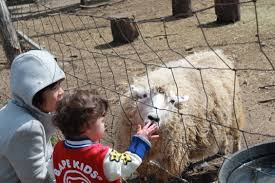 Pumpkin Picking Long Island Ny by Visit The Animals Here On Long Island Places To Go Momeefriendsli