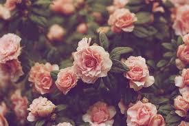 Vintage Flowers Photography Tumblr