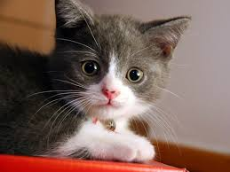 service cats cat sitter service cat sitting in your home while you travel