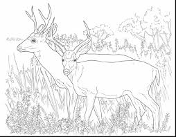 Unbelievable Deer Coloring Pages With Page And