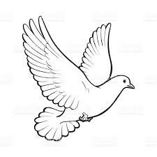 Best Black And White Dove Vector Design