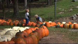 Pumpkin Patch Near Spring Tx by Visit Richmond Area Farms With The 2016 Pumpkin Patch Guide Wtvr Com
