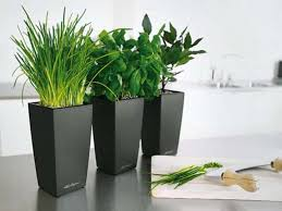 Entrancing Modern Ideas Pots Indoor Kitchen Planters With Green Plant And Black Pot Plants Color For Alo