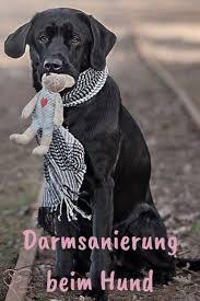 darmsanierung beim hund herzenshund kerngesund hunde