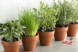 diese 5 kräuter und gemüsesorten kannst du im haus anbauen