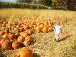 Pumpkin Patch Milwaukee by Milwaukee Kukhnya Mn Mondays Pine Tree Apple Orchard