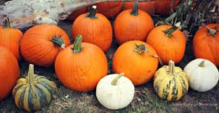 Cal Poly Pomona Pumpkin Patch Promo Code by La U0027s Top Best Pumpkin Patches In Los Angeles Momsla
