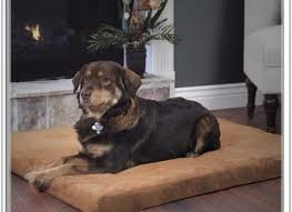 serta orthopedic dog bed dog beds and costumes
