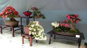 la voie des fleurs bonsaï d azalées au parc ueno le japon