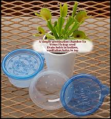 growing venus fly traps from seed flytrapcare
