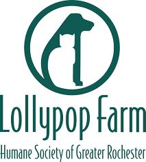 Pumpkin Patch Rochester New York by Adopt A Pet Lollypop Farm