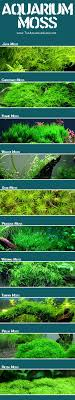 Best 25 Aquarium ideas on Pinterest