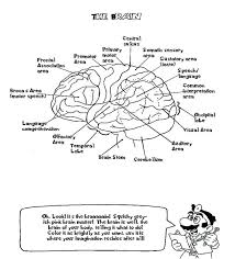 The Human Brain Coloring Book Free Pdf Download Anatomy Pages Facts Printable Diamond Full Size