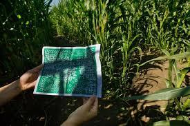 Pumpkin Patch Near Dixon Ca by Dixon U0027s Landmark Corn Maze The World U0027s Largest U2013 Again The
