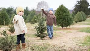 Pinecrest Christmas Tree Farm by List Christmas Tree Farms Around West Michigan Wotv4women Com