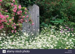 Garden Gate Rustic Wooden Climbing Roses Daisies Elsing Hall Rose Flower Flowers Gardens Gates
