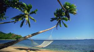 Palm Tree Hammock