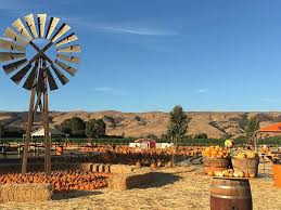 Pumpkin Patch San Jose 2017 by Attractions Spina Farms Pumpkin Patch In San Jose Ca