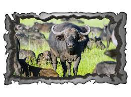 3d wandmotiv bison tier afrika kuh wandbild wandsticker selbstklebend wandtattoo wohnzimmer wand aufkleber 11e063 3dwandtattoo24 de