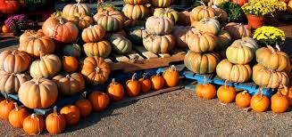 Pumpkin Picking Nj by Five Fun Things For Fall In Montclair Nj Massage Montclair