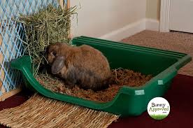 litter box set up for rabbits what are the choices bunny